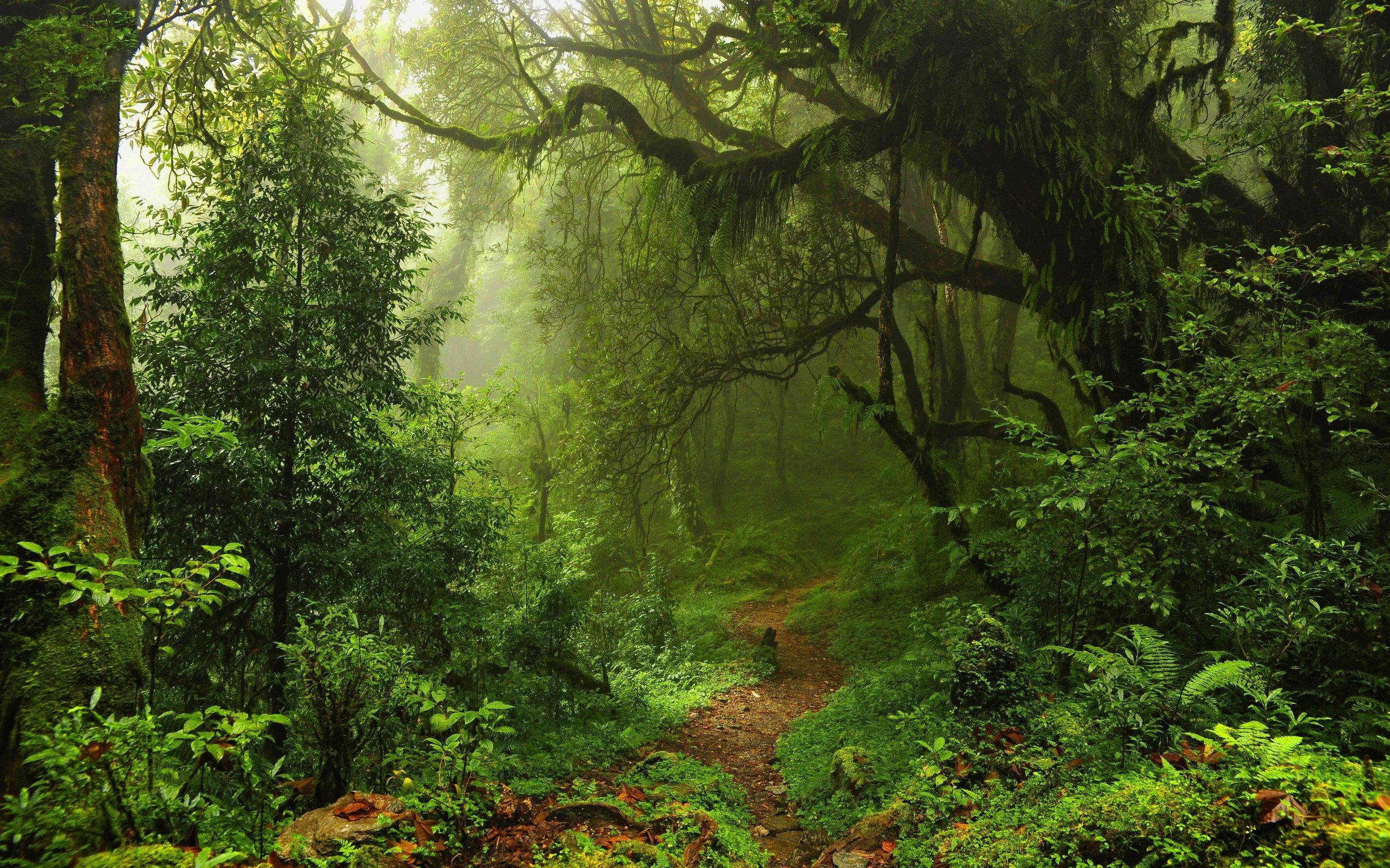 new map theme jungle rainforest black desert online